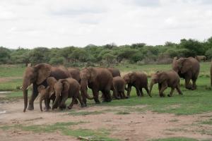 Leo's erste Elefantenherde