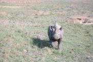 Das Black Rhino im Anlauf auf unser Auto